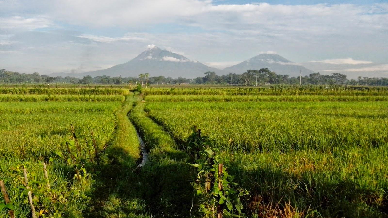 Jumlah Kecamatan dan Desa di Kabupaten Klaten