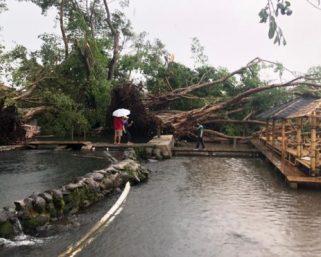 Umbul Ponggok, Umbul Manten hingga Pohon di Pabrik Aqua Klaten diterjang Angin Puting Beliung