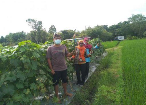 Pemuda Klaten Sukses Buktikan Profesi Petani Lebih Menjanjikan